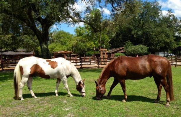 Ranch Horses 2
