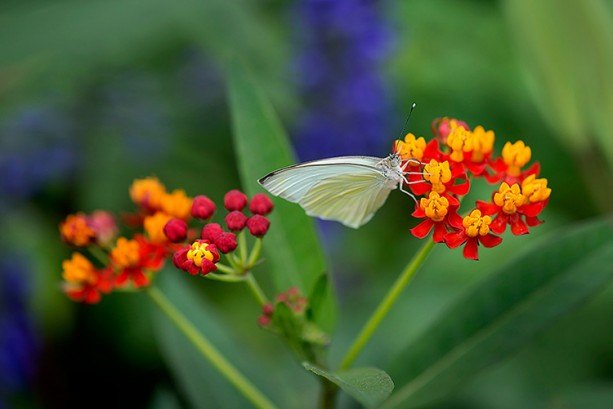 Build Your Own Butterfly Garden with Tips from Epcot International Flower & Garden Festival