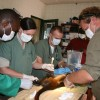 The team giving a red-tailed monkey a physical and clean bill of health