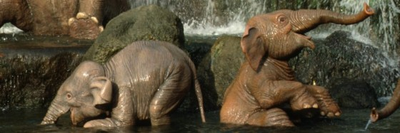 Jungle Cruise - Elephants