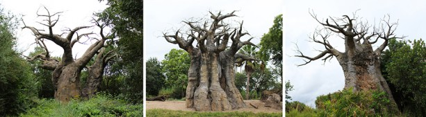 baobab-blog