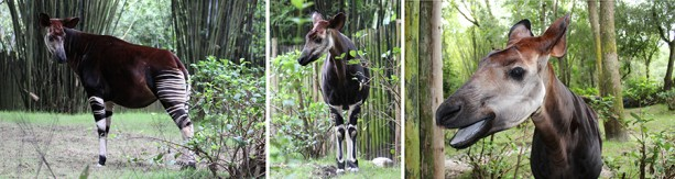 okapi-blog