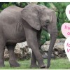 Wildlife Wednesday: Animal Valentine's Day Cards to Share