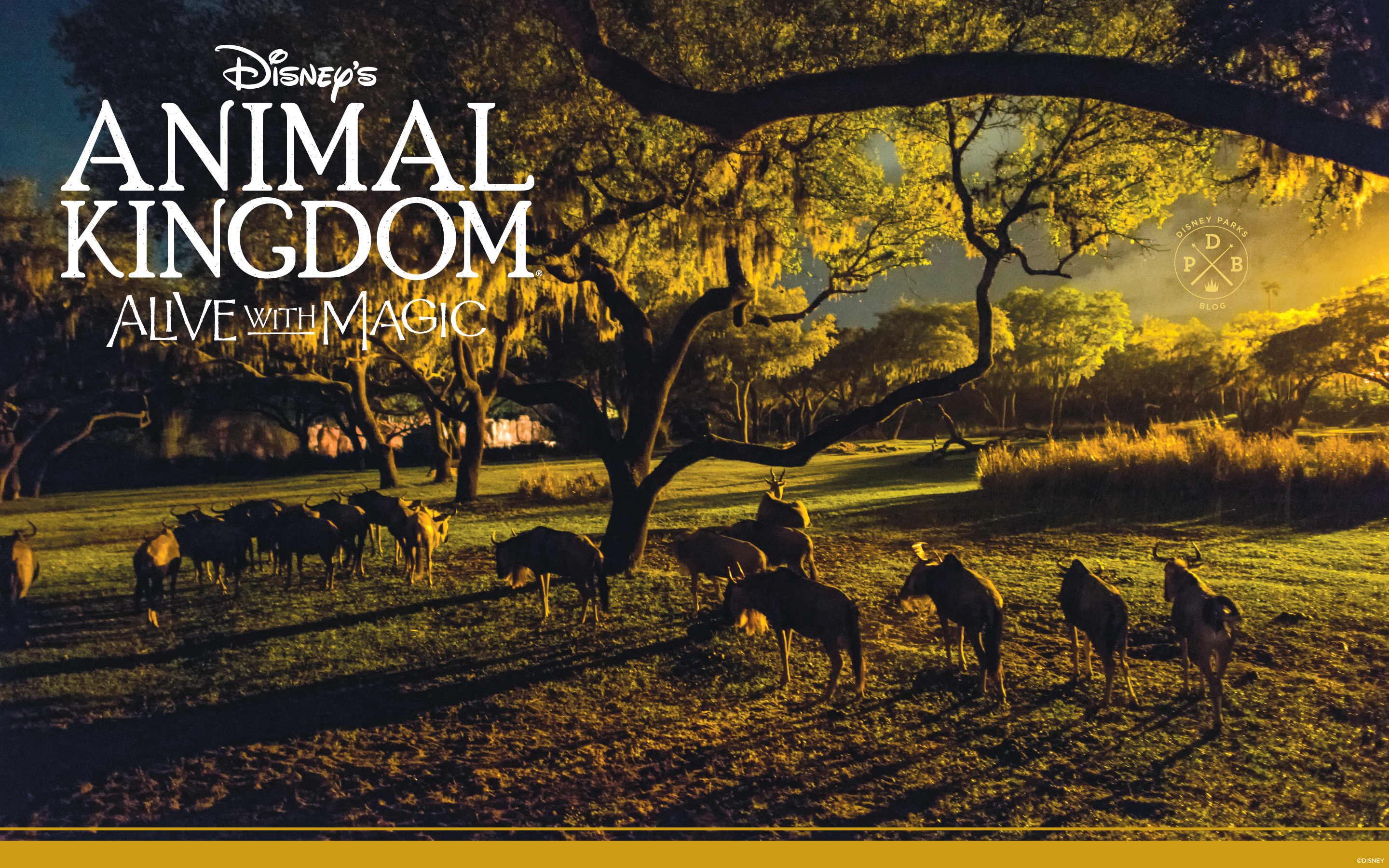 disney's animal kingdom 'nighttime'-inspired wallpaper | disney