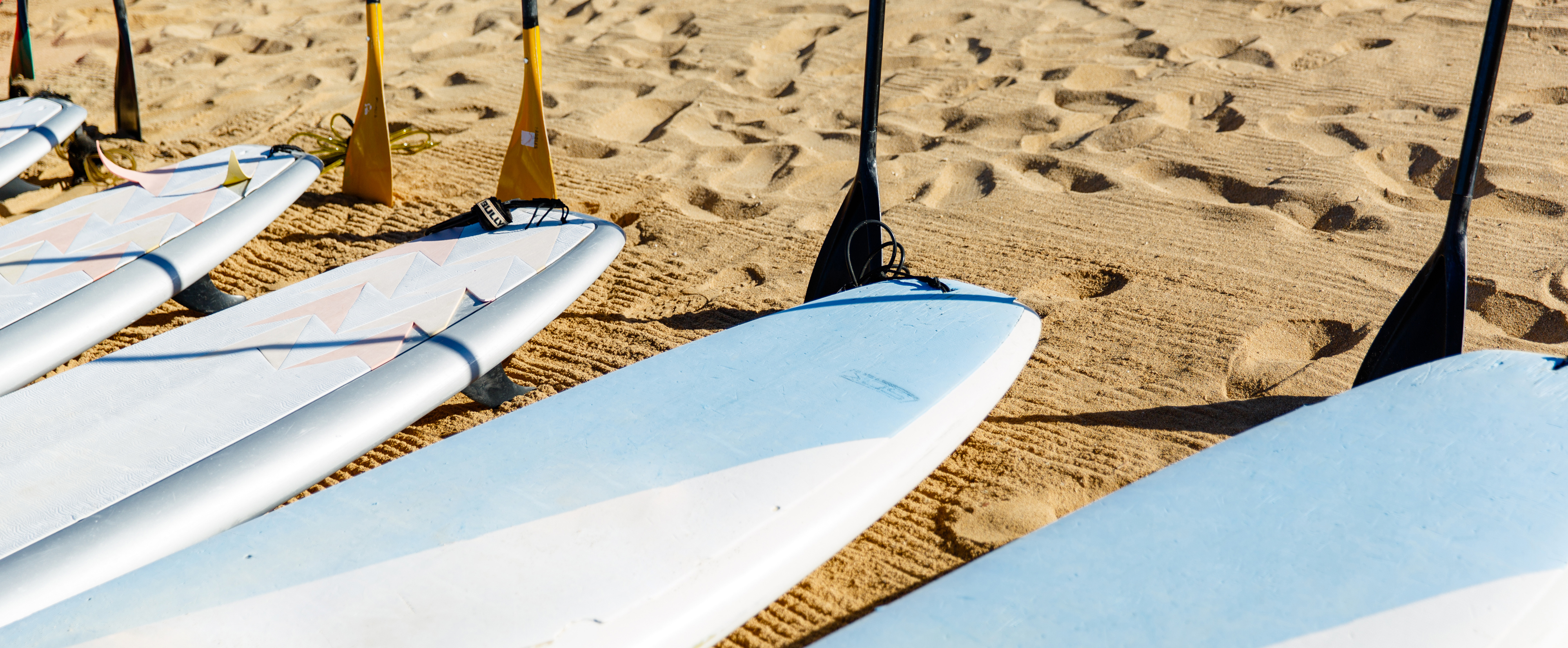 Five paddleboards lined up with their oars standing upright in the sand