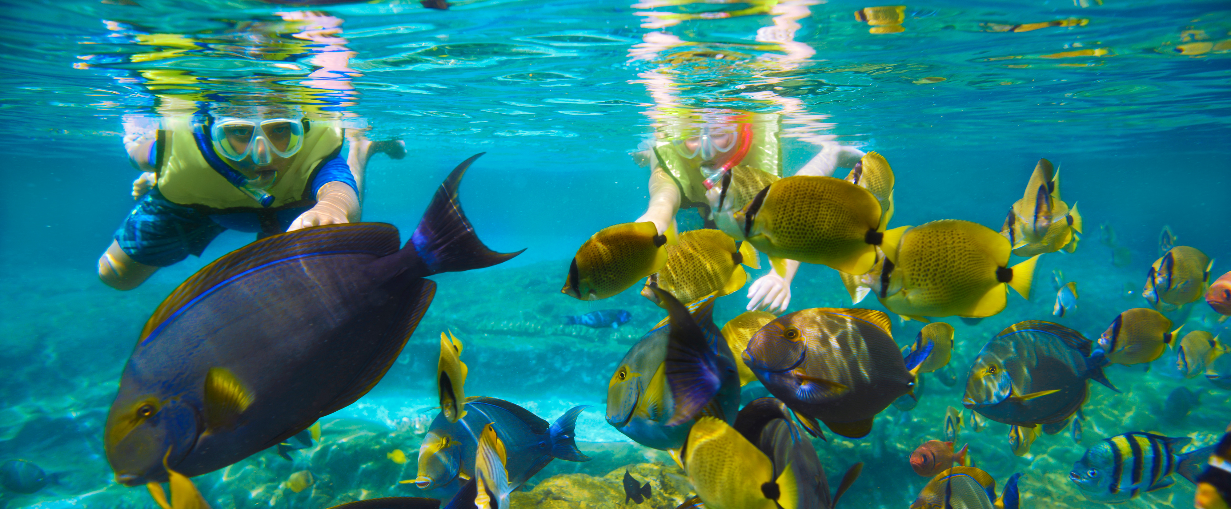 レインボー・リーフでシュノーケリングを楽しみながら熱帯魚の群れに向かって泳ぐ若いゲストたち